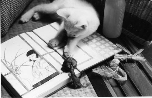 「桜子」と愛猫「長子」さん