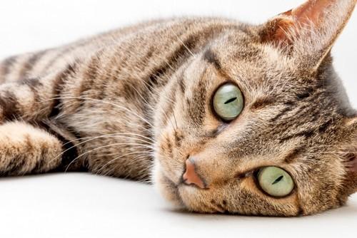 かまって欲しい猫