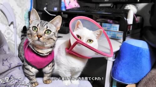 同じ方向を見る2匹の猫