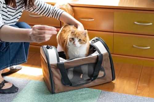 おやつを使って猫をキャリーバッグに入れる人