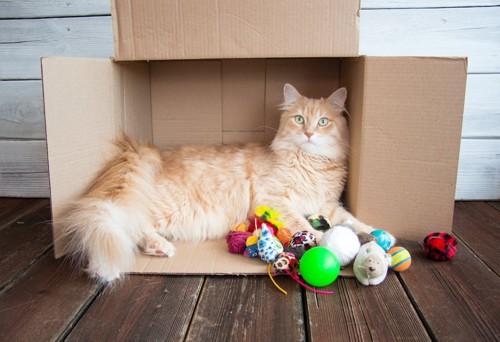 横になった段ボール箱に入る猫とおもちゃ