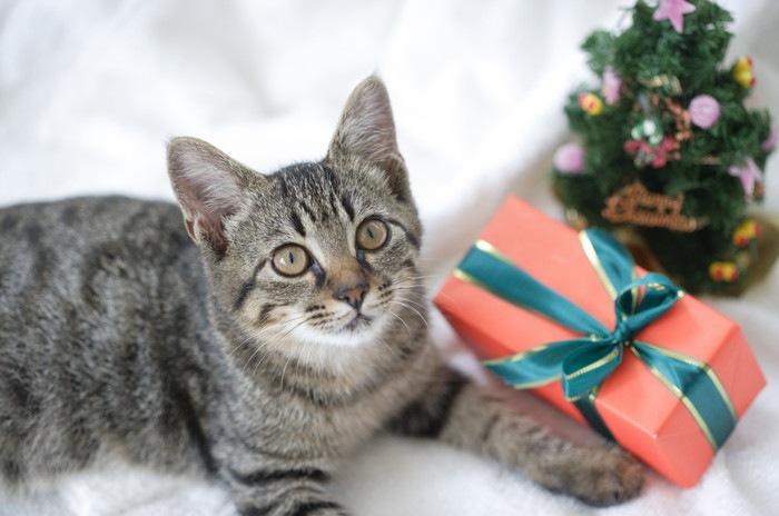 猫とプレゼントイメージ