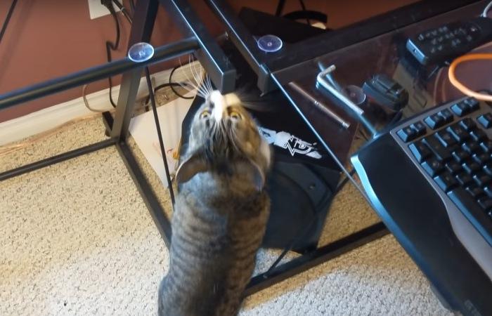 机をくんくんする猫