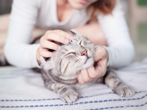 飼い主に撫でられて目を閉じている猫