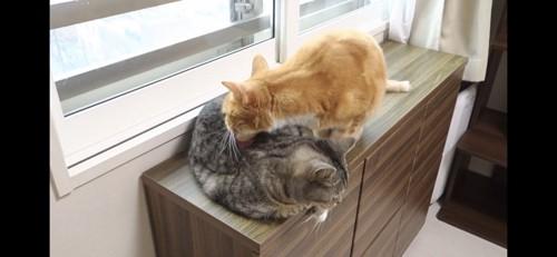 体をぺろぺろ舐める猫