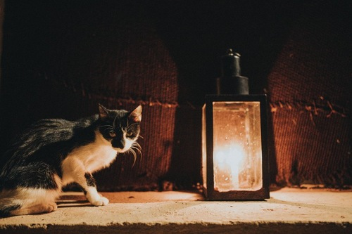 夜中に歩く猫
