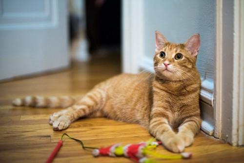 おもちゃの前に横たわる猫