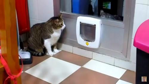 何かを待つ猫
