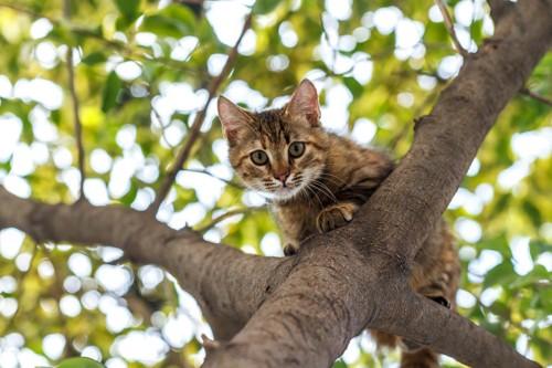木登りをする猫
