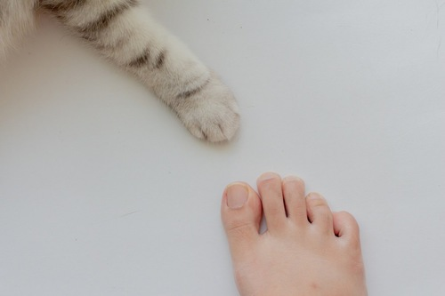 人の足と猫の手
