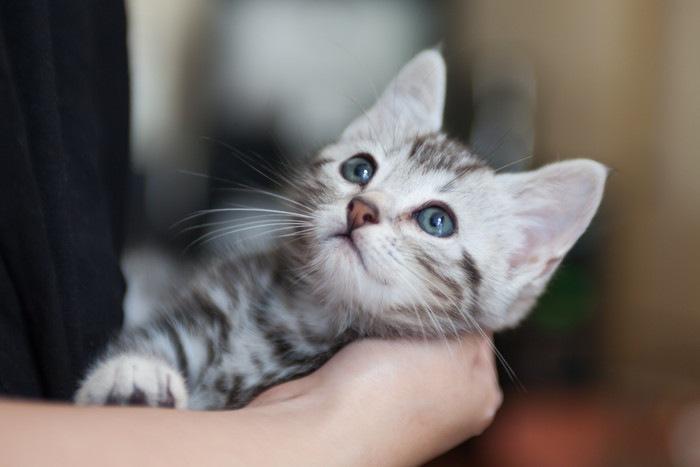 抱きかかえられる子猫