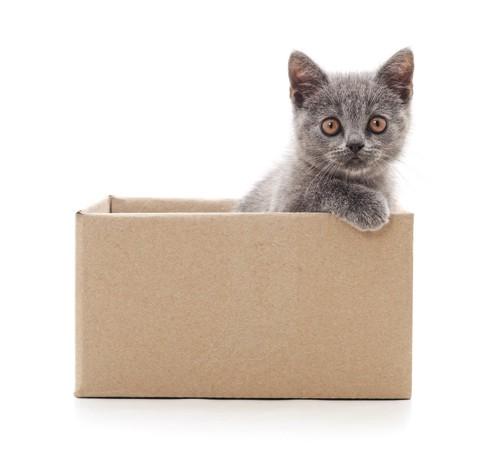 箱に入っている子猫