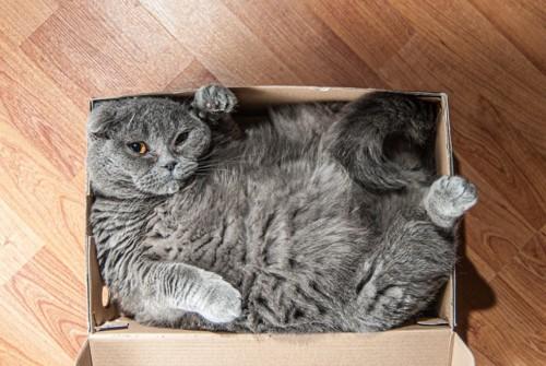 箱の中でくつろぐ猫