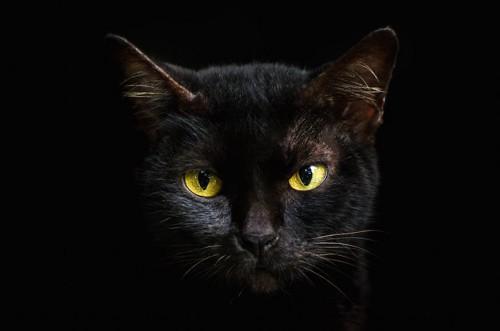 暗闇の中で目が光る黒猫