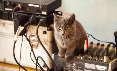 音響機械の上の猫