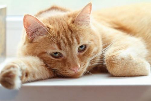 悲しみにくれる猫
