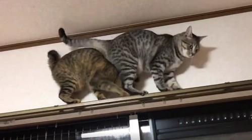 動かない後方の猫