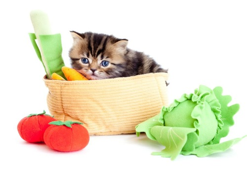 猫と野菜のおもちゃ