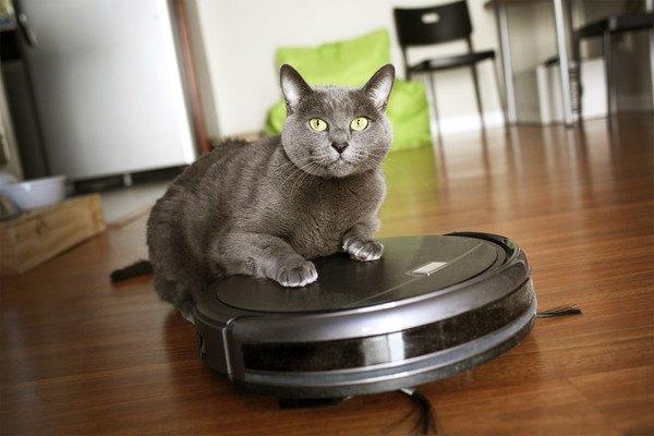 電気掃除機の上に乗る猫