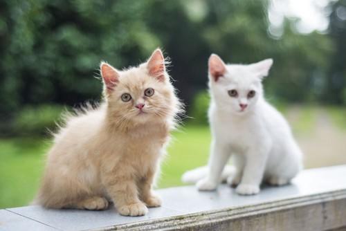茶猫と白猫
