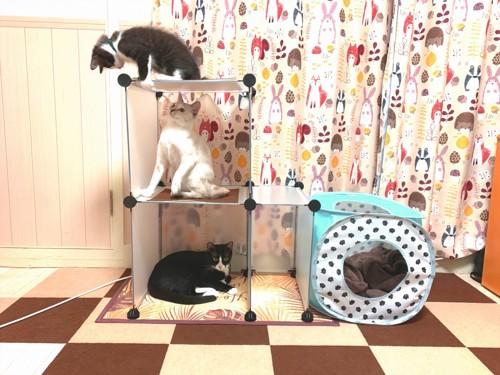 三頭の猫がDIYキャットタワーでくつろいでいるところ