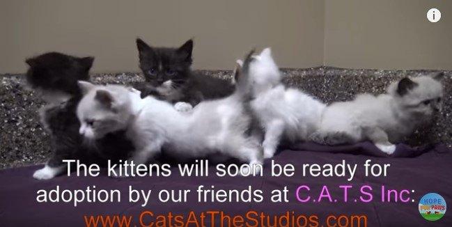 一時預かり施設に来た子猫たち