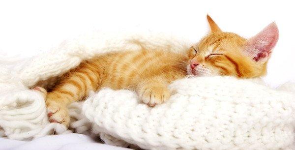 クッションの上で手を伸ばしてあくびをする猫