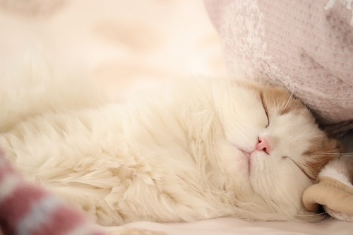 リラックスしてる猫
