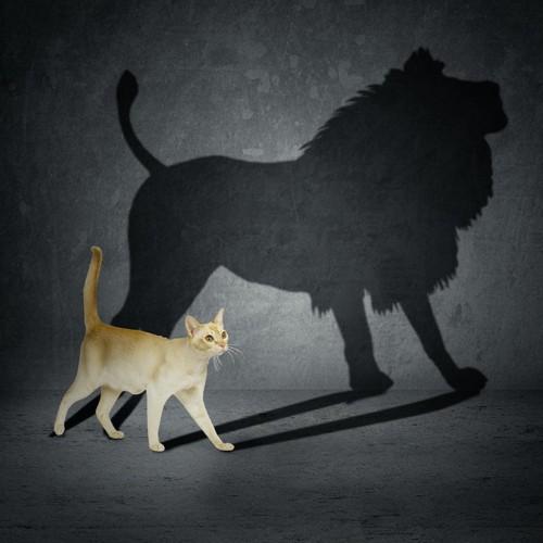 歩く猫とたてがみのあるライオンの影