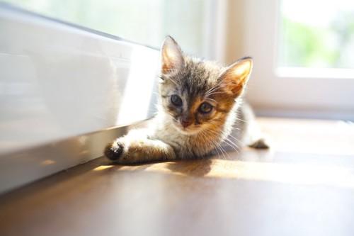 室内の日差しと子猫
