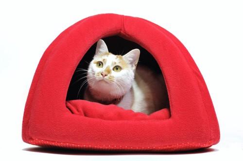猫用のベッドの中でくつろぐ猫