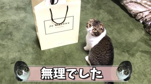 袋の横に座る猫