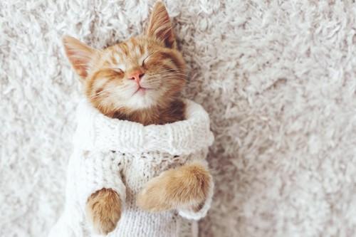 服を着て仰向けに眠る子猫