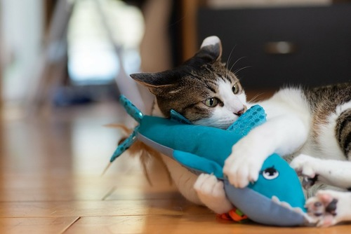青い蹴りぐるみを掴んで遊ぶ猫