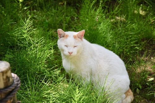 草むらにいる白猫
