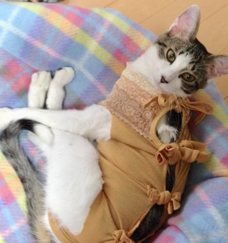 オレンジ服でくつろぐ猫さん
