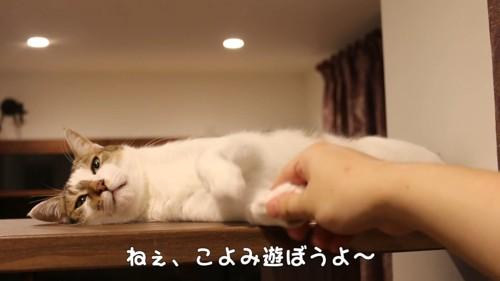 手を握られる猫