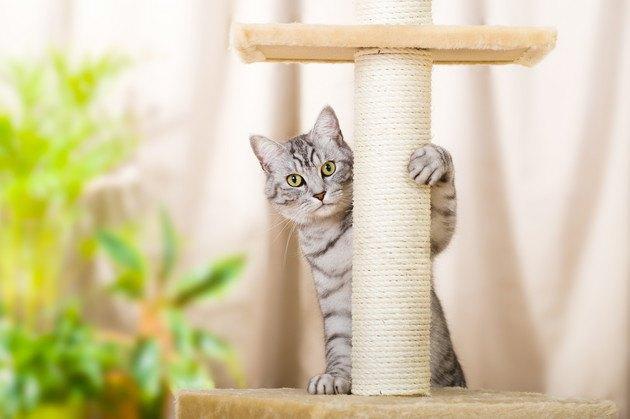 マンションのキャットタワーと猫