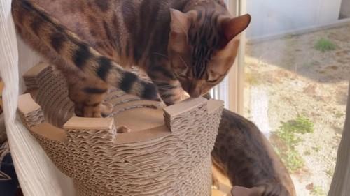 塔の上に立つ猫