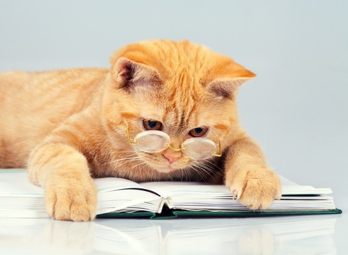 本を読む眼鏡をかけた猫