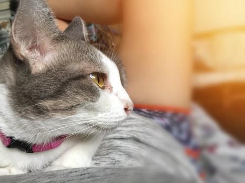 寝転ぶ飼い主のお腹の上でくつろぐ猫