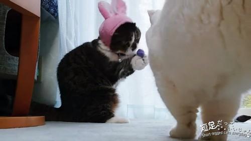 前足でボールを持つ猫