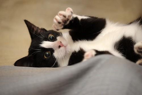 エアーふみふみする猫