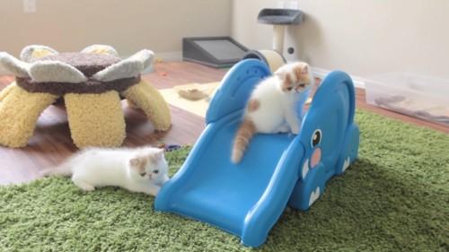 滑り台に集まる子猫
