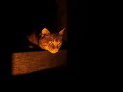 暗闇にいる猫
