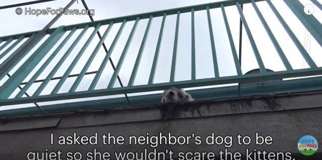 下を見下ろす犬