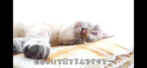 白目をむいて寝る