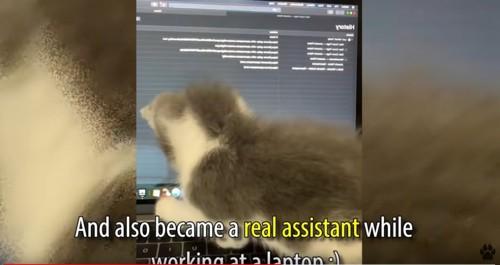 コンピュータに乗る猫