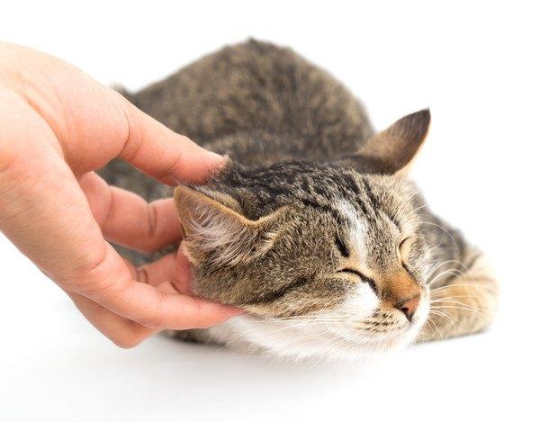 顎を手で撫でられて嬉しい猫