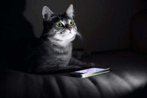暗い部屋にいる猫とスマートフォン